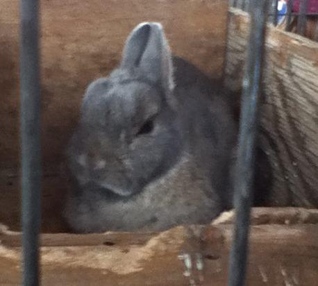 Beetus Bunny